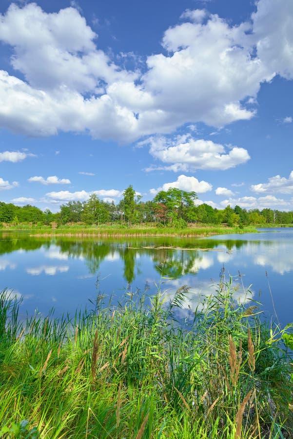 O céu azul da paisagem do verão da mola nubla-se árvores do verde da lagoa do rio foto de stock
