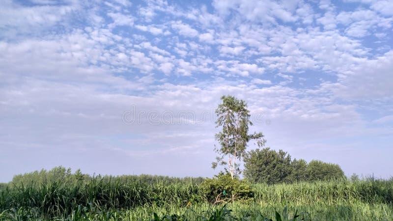 O céu azul e a árvore verde fotos de stock