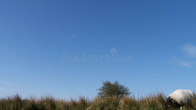 O céu azul sobre Bodmin amarra imagem de stock