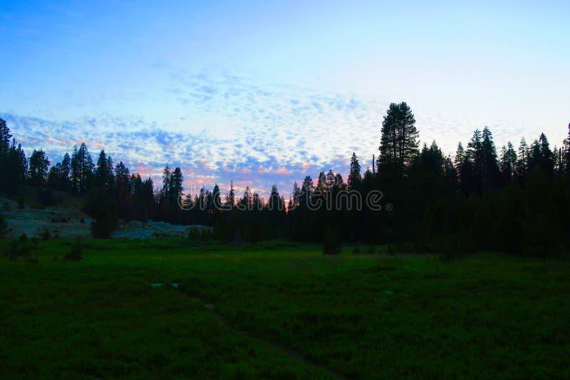 O céu colorido no crepúsculo sobre o pinho alinhou o prado foto de stock
