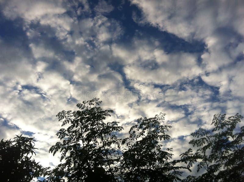 O céu da tarde fotografia de stock royalty free