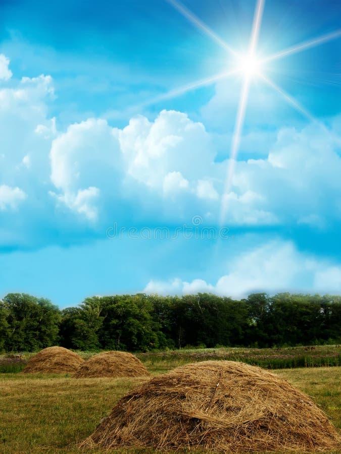 O céu de madeira nubla-se o campo foto de stock