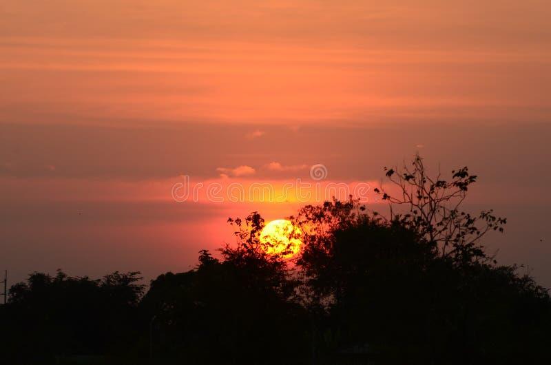 O céu do por do sol nubla-se sobre a paisagem panorâmico das silhuetas das partes superiores da árvore imagens de stock