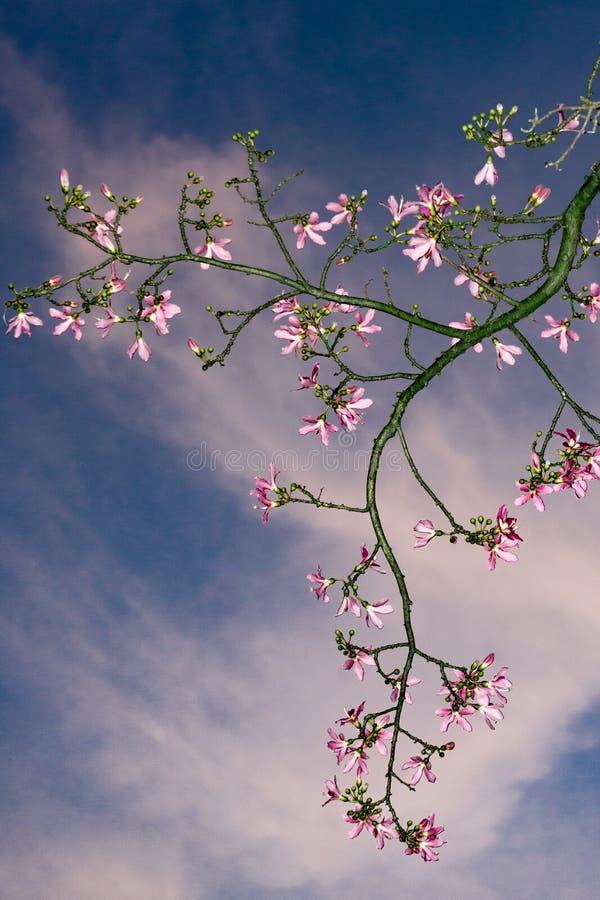 O céu e as flores imagens de stock royalty free