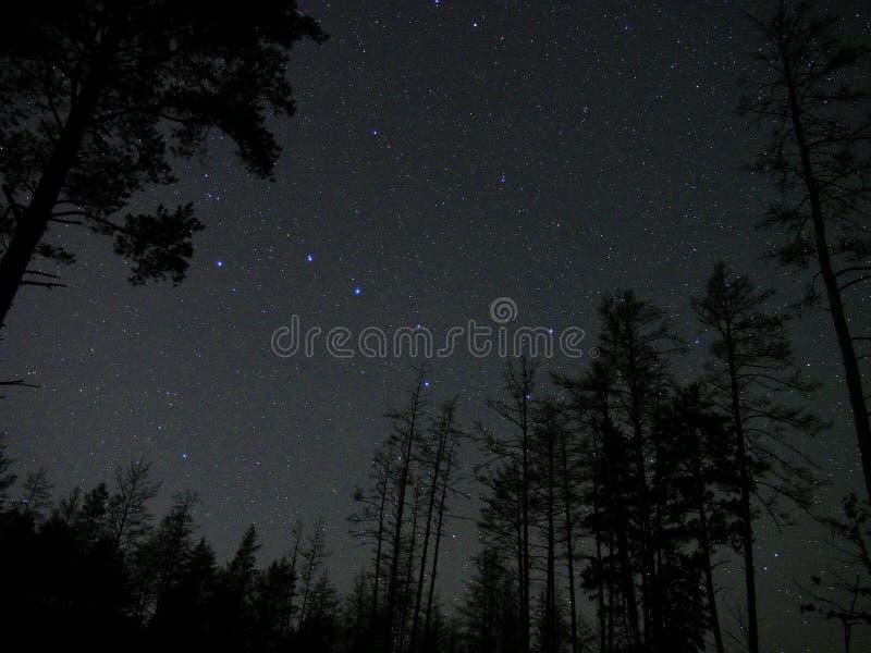O céu noturno stars a atmosfera da floresta da constelação do dipper grande imagens de stock