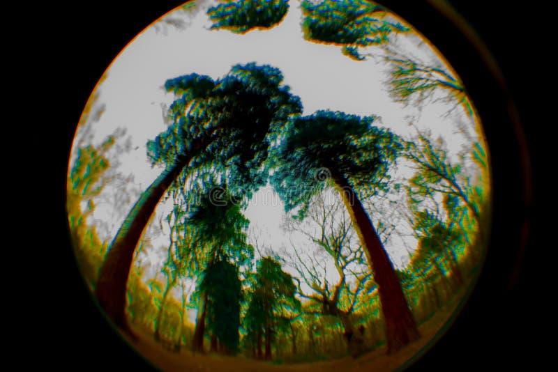 O círculo, círculo, curvou o céu abstrato, árvores, redemoinhos imagem de stock