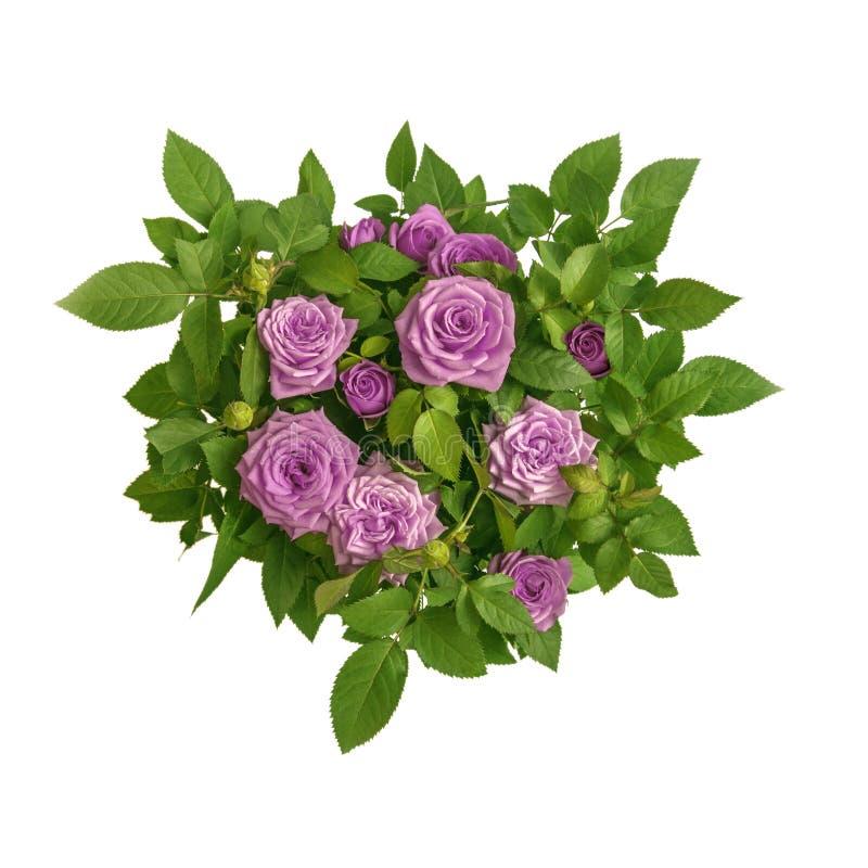 O círculo magenta cor-de-rosa do ramalhete das rosas cercado pelo verde sae close up da vista superior Símbolo do amor, paixão, b fotografia de stock royalty free