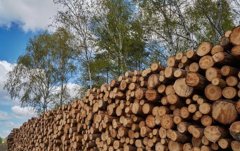 O cabo de troncos de árvore cortados foto de stock