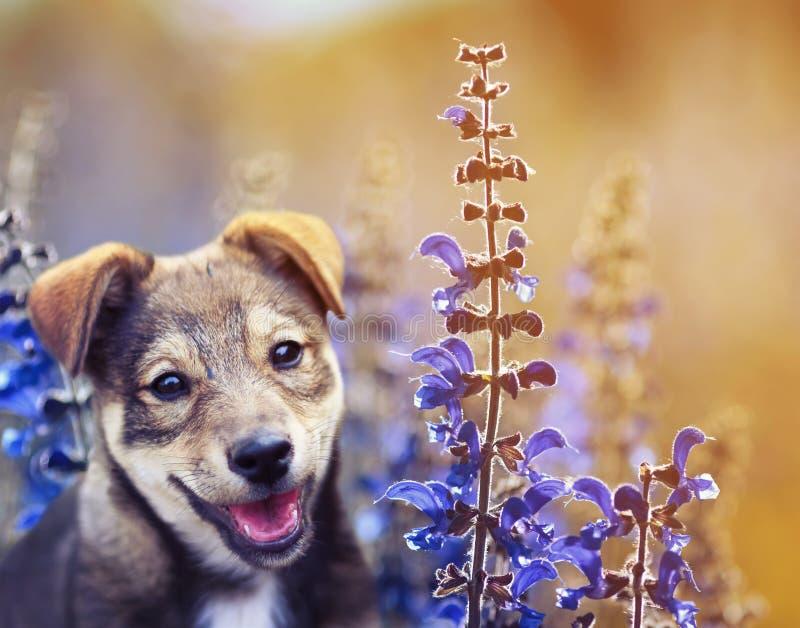 O cachorrinho adorável bonito de Portert senta-se em um prado ensolarado do verão do bri foto de stock royalty free