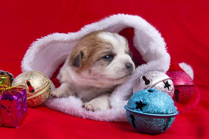 O cachorrinho do Natal imagem de stock royalty free