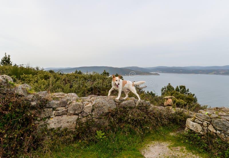 O cachorro e o hermitage fotografia de stock
