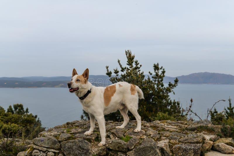 O cachorro e o hermitage fotografia de stock royalty free