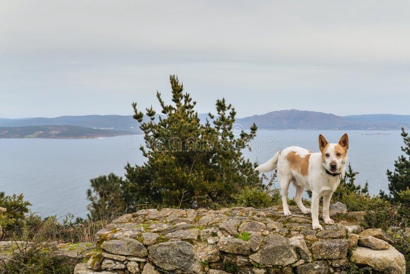 O cachorro e o hermitage foto de stock royalty free