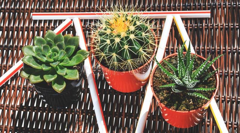 O cacto e as plantas carnudas com bebida colam no fundo extravagante fotografia de stock royalty free