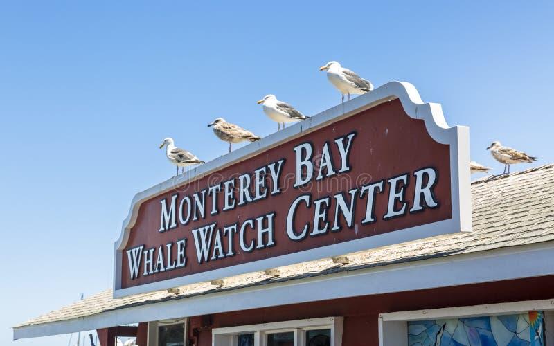 O cais do pescador, baía de Monterey, península, Monterey, Oceano Pacífico, Califórnia, Estados Unidos da América, America do Nor fotos de stock