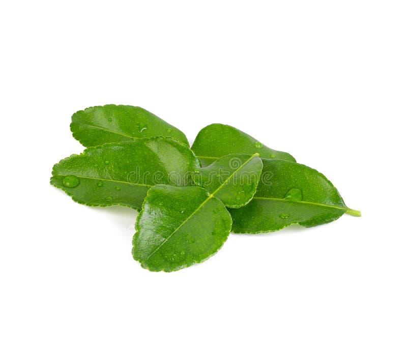 O cal do kaffir da bergamota deixa erva o ingrediente fresco isolado no fundo branco fotos de stock