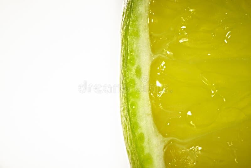 O cal verde no fundo branco imagem de stock royalty free