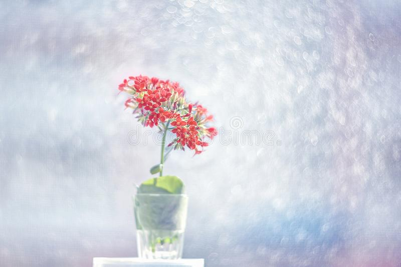 O calanchoe cor-de-rosa pequeno floresce em um fundo artístico bonito em um dia ensolarado wallpaper fotografia de stock royalty free