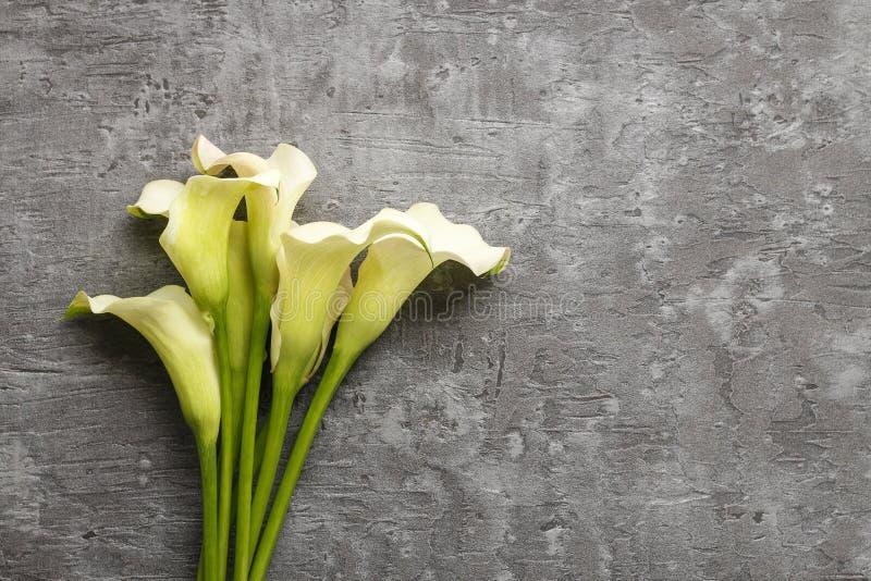 O calla branco floresce (o Zantedeschia) no fundo cinzento, fotos de stock
