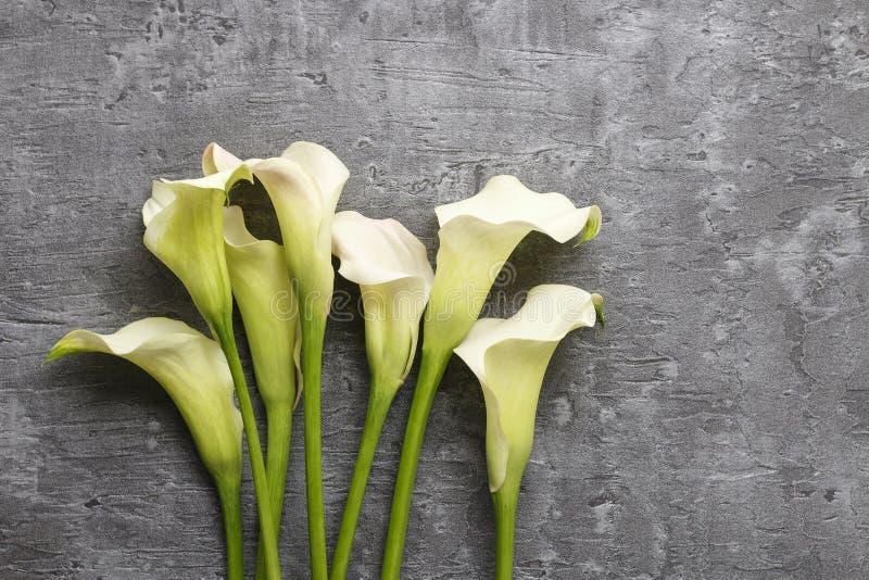 O calla branco floresce (o Zantedeschia) no fundo cinzento, fotografia de stock royalty free
