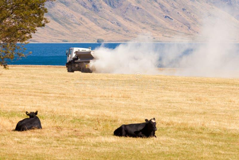 O caminhão do relógio das vacas aplica o fertilizante no campo do pasto fotos de stock
