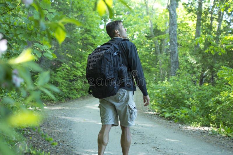 O caminhante admira-se em árvores e em animais selvagens na floresta imagens de stock