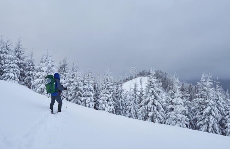 O caminhante, com trouxa, está escalando na cordilheira, e admira o pico neve-tampado Aventura épico no inverno fotografia de stock royalty free