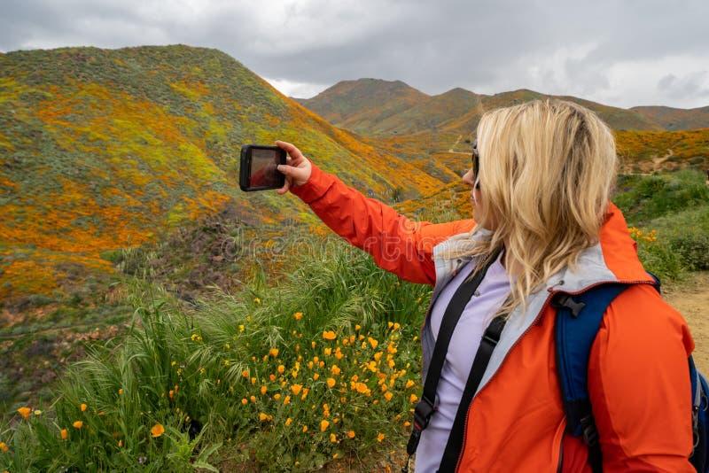 O caminhante louro da mulher tomar um selfie com um telefone celular quando em Walker Canyon, apreciando o superbloom das papoila fotos de stock