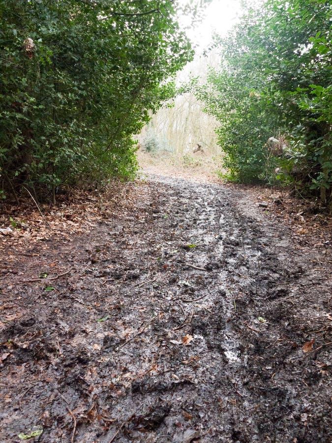 o caminho enlameado através da luz da sebe da floresta adiante nenhuns povos anda imagem de stock