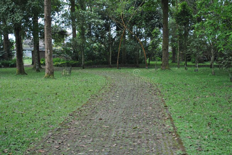 O caminho no jardim botânico de Bedugul Bali fotografia de stock royalty free