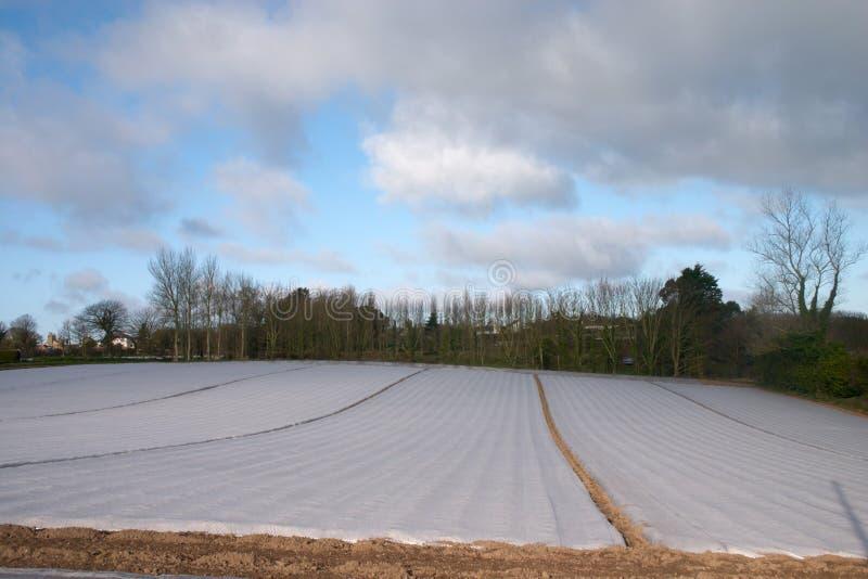 O campo coberto perto polyethylen a película foto de stock royalty free
