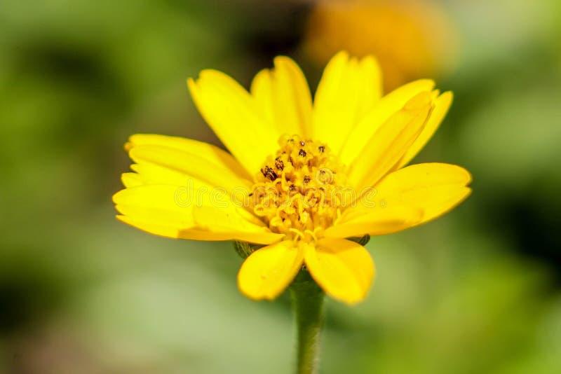 O campo de flores da mola e aperfeiçoa o dia ensolarado , tiro do marcro fotos de stock
