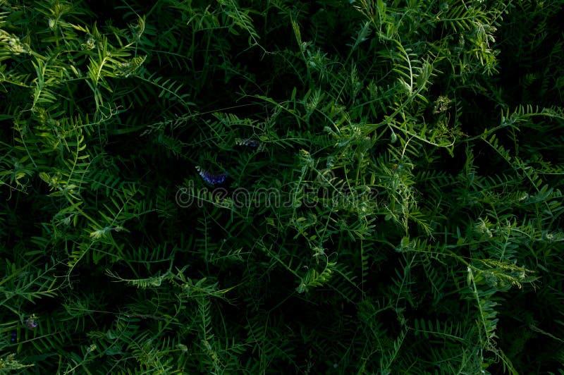 O campo de grama floresce a obscuridade do fundo - verde Arvoredos tropicais Mundo misterioso da flora A abstração secreta da flo fotografia de stock royalty free