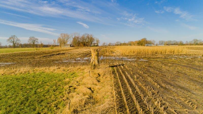 O campo de milho é afetado pela seca da seca no inverno imagens de stock royalty free