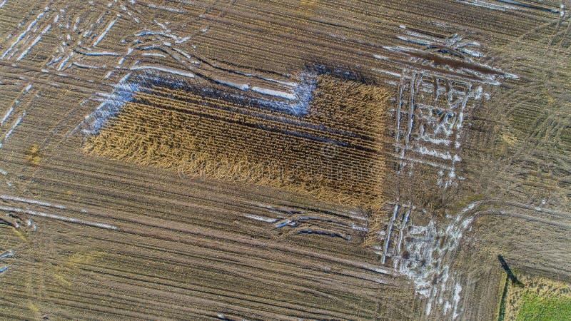 O campo de milho é afetado pela seca da seca no inverno fotos de stock royalty free