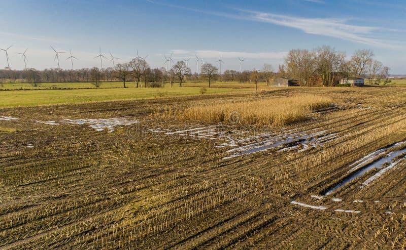 O campo de milho é afetado pela seca da seca no inverno fotografia de stock