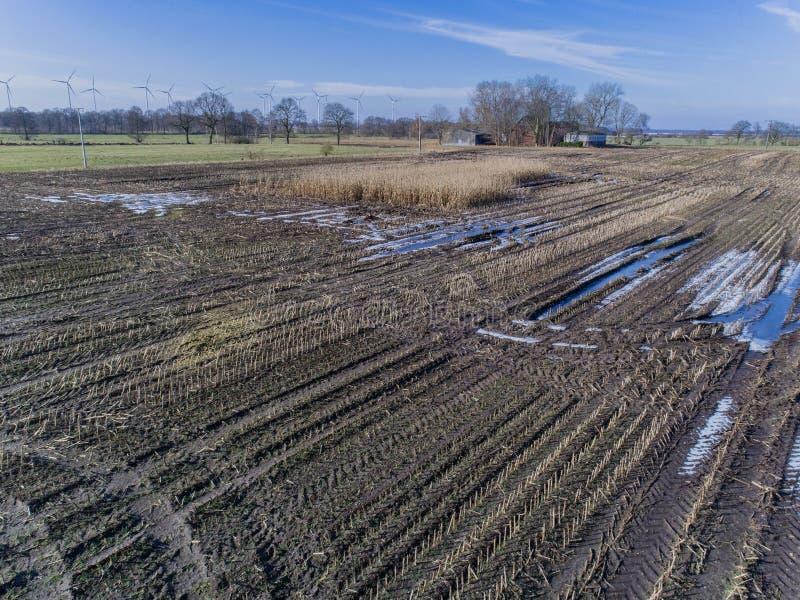 O campo de milho é afetado pela seca da seca no inverno fotos de stock