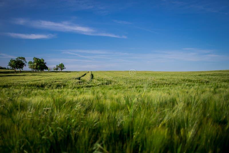 O campo de trigo 2 imagens de stock