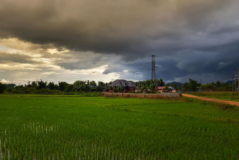 O campo do arroz da tempestade fotografia de stock royalty free