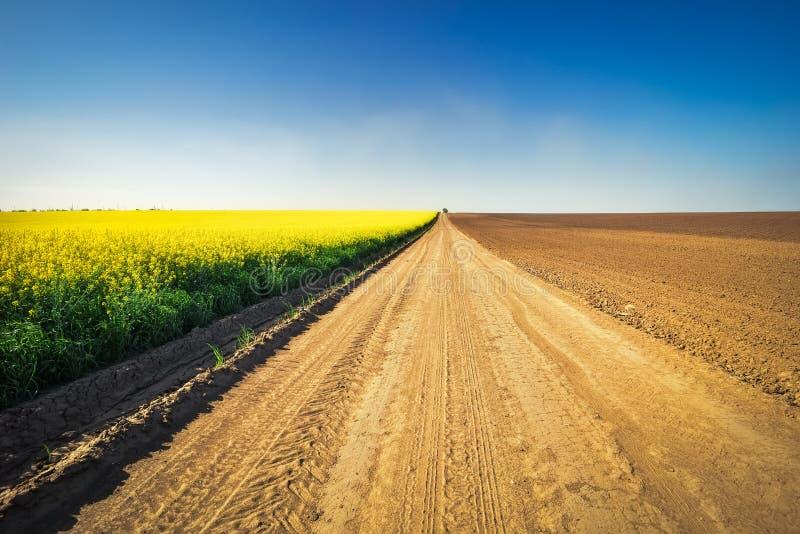 O campo do canola da colza, com estrada rural, arou o campo e o cl foto de stock