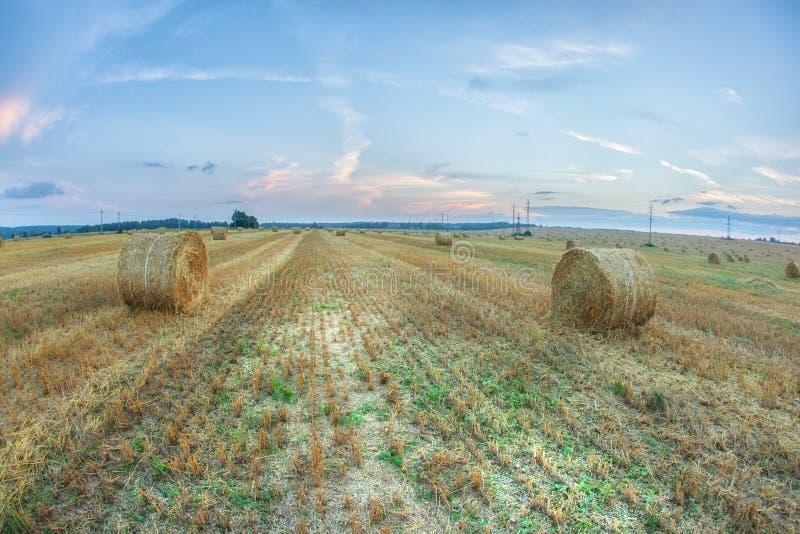 O campo dourado espetacular com feno redondo rola sob um céu azul fotografia de stock royalty free