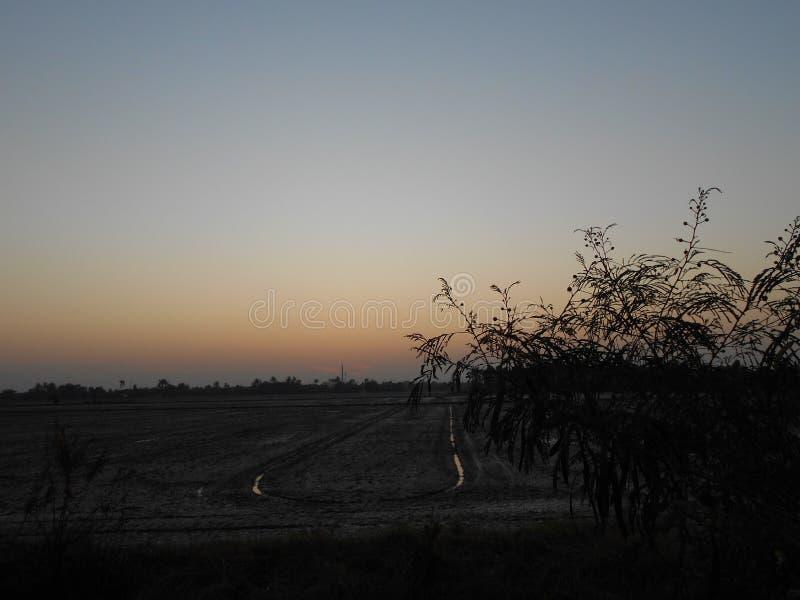 O campo está no nascer do sol fotografia de stock