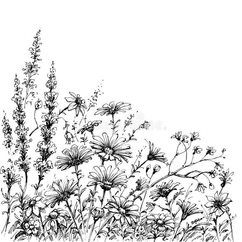 O campo floresce o esboço ilustração do vetor