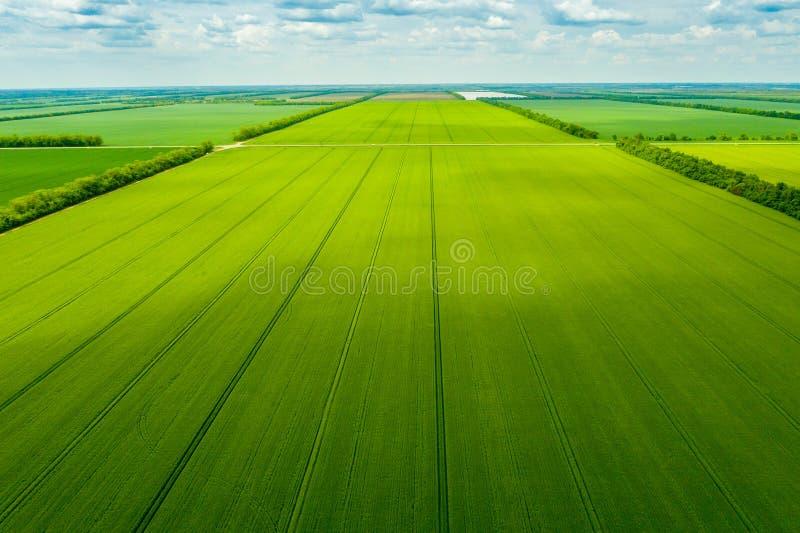 O campo verde do pa?s com fileira alinha, vista superior foto de stock royalty free