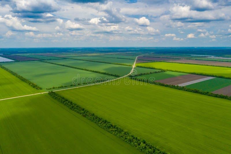 O campo verde do pa?s com fileira alinha, vista superior imagens de stock