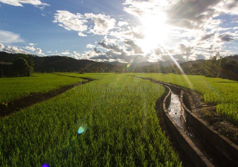 O campo verde do terace no maehongson Tailândia do malanoi foto de stock