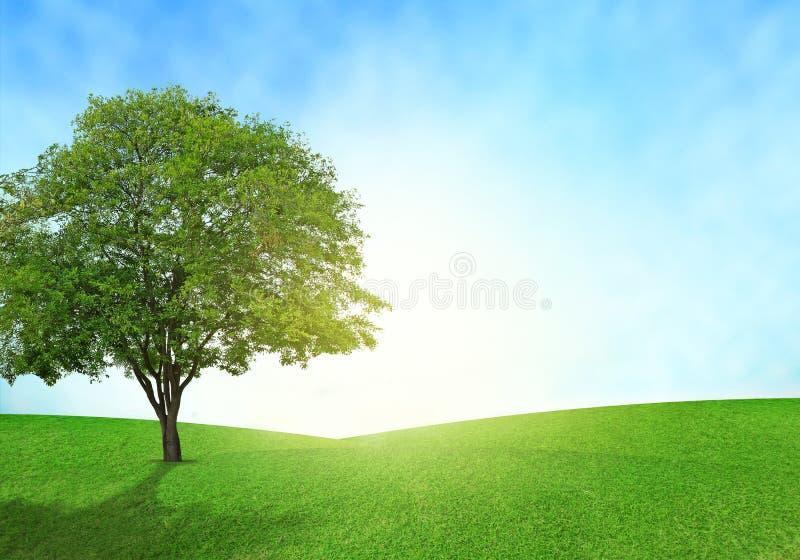 O campo verde, o céu azul e a iluminação da árvore alargam-se na grama imagem de stock