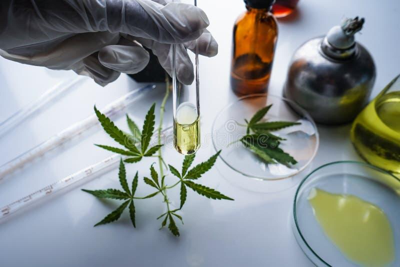 O cannabis, marijuana, ?leo de c?nhamo ? uma medicina foto de stock