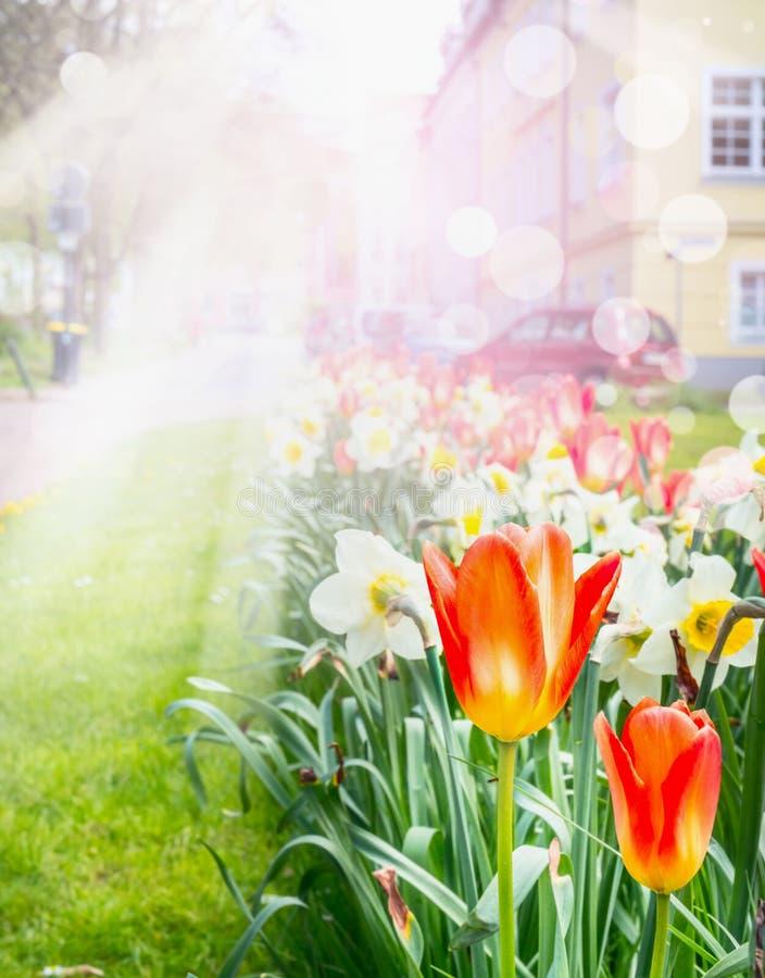 O canteiro de flores com mola colorida floresce a florescência em raios do sol da mola e no bokeh borrado do fundo foto de stock