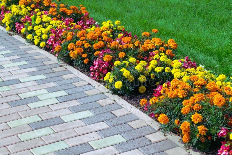 O canteiro de flores de cores diferentes arranjou ao longo da borda do gre imagens de stock
